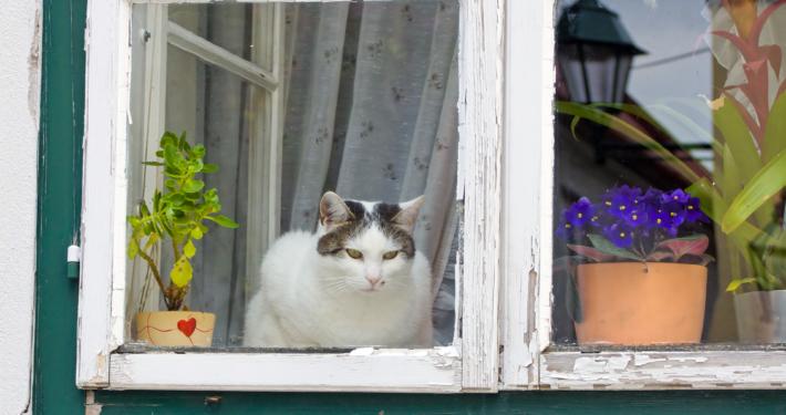 Katze guckt aus dem Fenster und guckt raus § Foto: colourbox