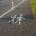 Piktogram Fußverkehr auf der Straße